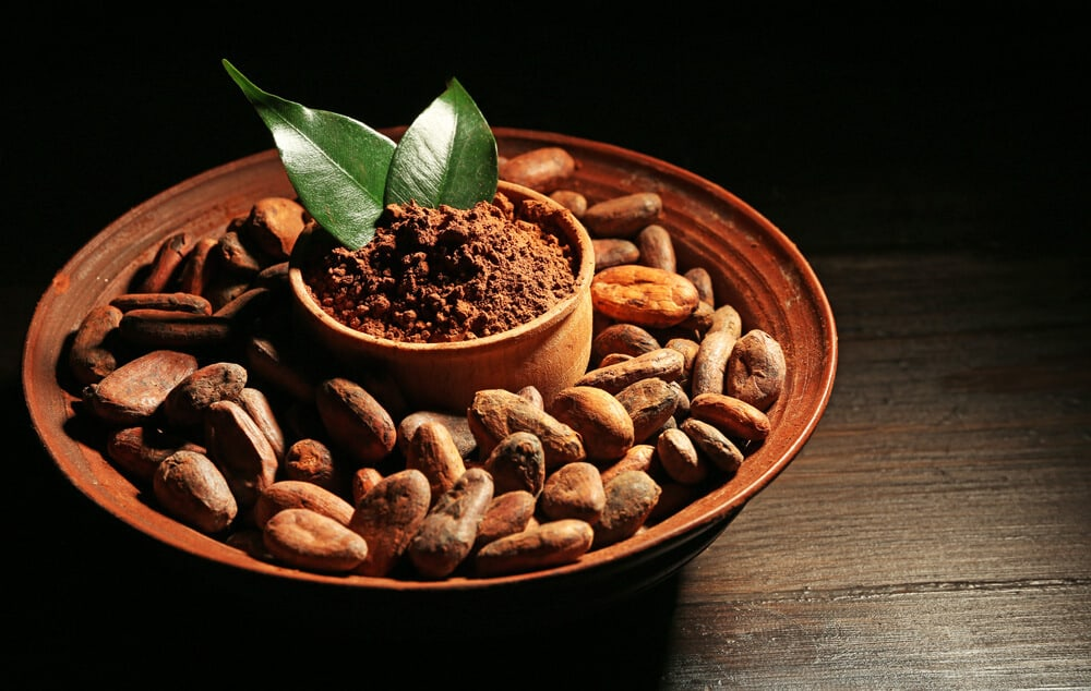 cocoa catechins